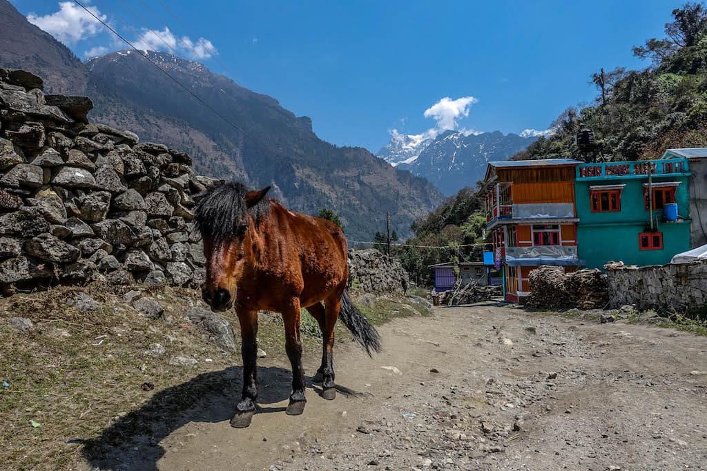Fotografia koňa na ceste v dedine Bagarchap a vysokými horami na pozadí zo západného hrebeňa Manaslu